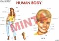 emberi_test_angol:01 human body.qxd.qxd