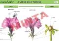 A virág és a termés