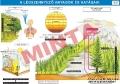 A légszennyező anyagok és hatásaik