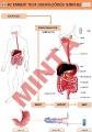 Az emberi test szerveződési szintjei
