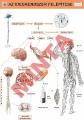 Az idegrendszer felépítése