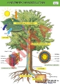 A növények anyagszállítása