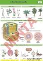 A növények szára