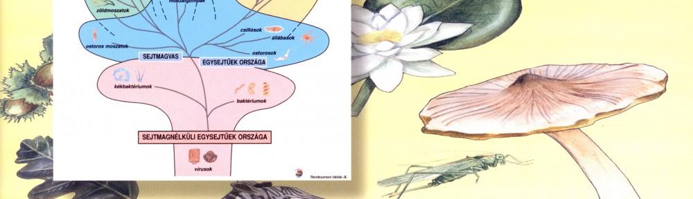 elovilag atlasza2