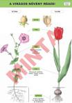 A virágos növény részei II.