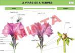 A virág és termés