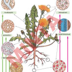 A növényi test szövetei