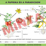 A paprika és paradicsom