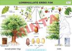 Lombhullató erdei fák