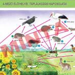 A mező élőlényei, táplálkozási kapcsolatai