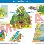 Az erdő szerepe